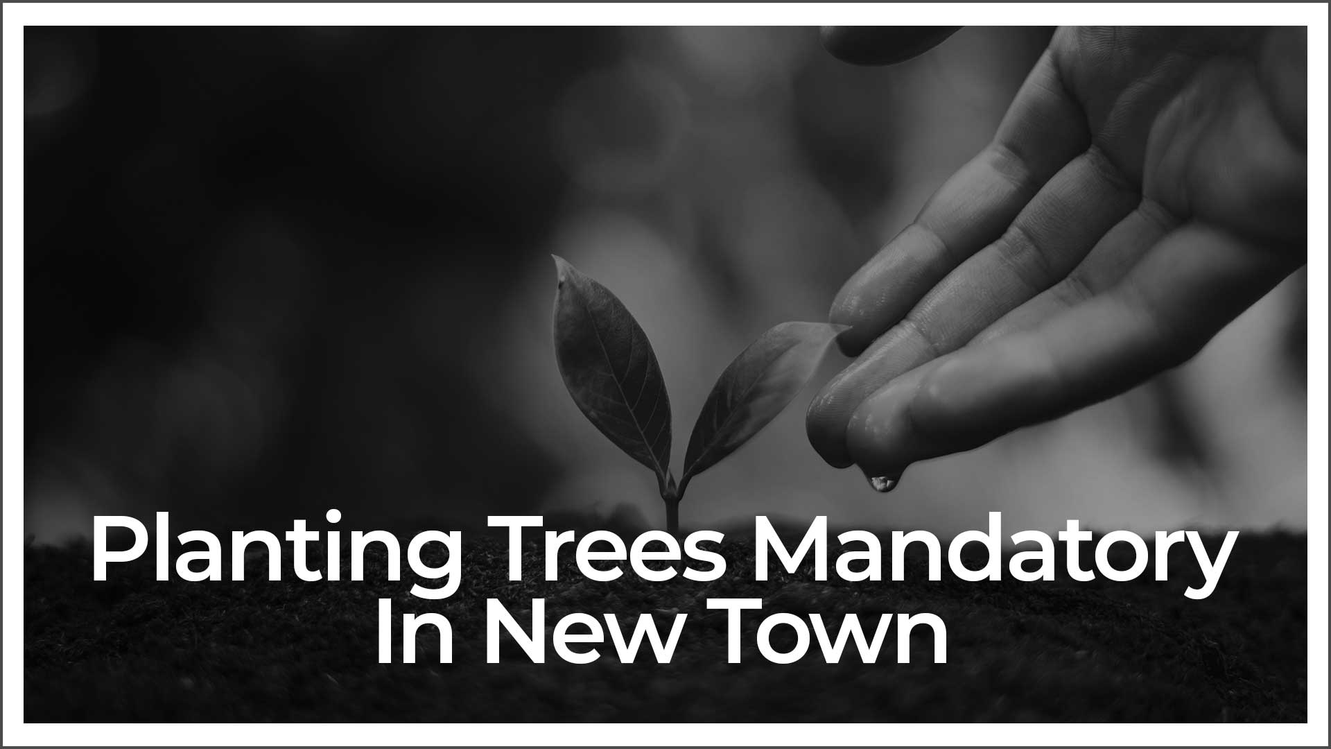 NKDA Makes It Mandatory To Plant Trees